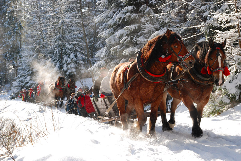 Sleigh ride in Roztocze